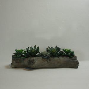 tronco_cactus